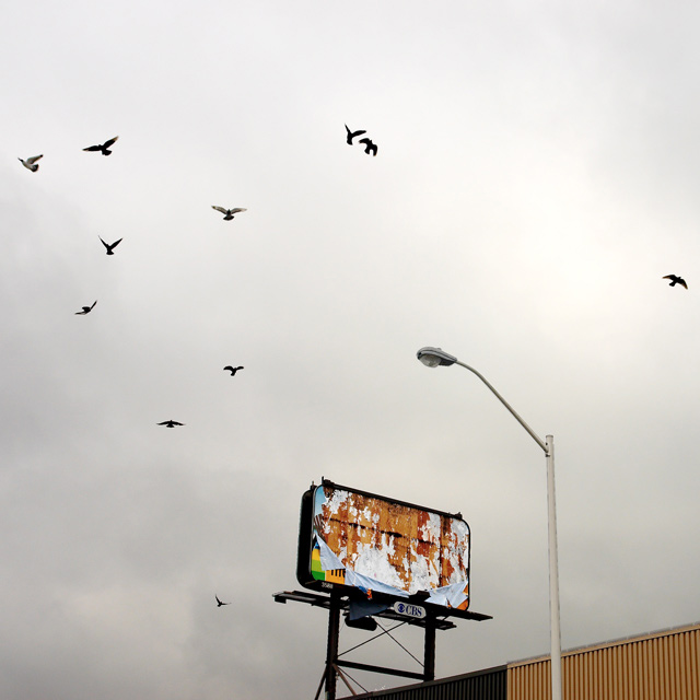 20091104billboards1.jpg