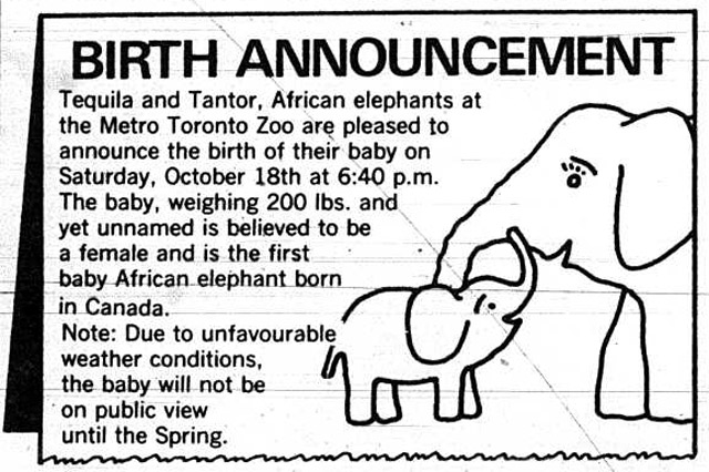 Birth Announcement of African elephant Thika  (18-Oct-1980, 6:40pm), Toronto Zoo