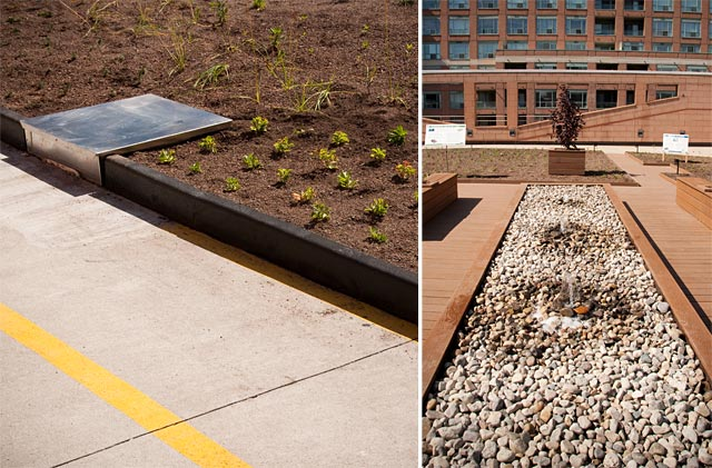 Ymca Green Roof Unveiled