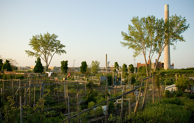 Allotment_Gardens_3.jpg