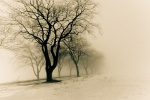 disappearing into the fog by -liyen-