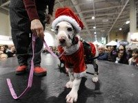 Winter Woofstock is coming to town this weekend. Ruff said. Photo courtesy of Dianne Weinrib.