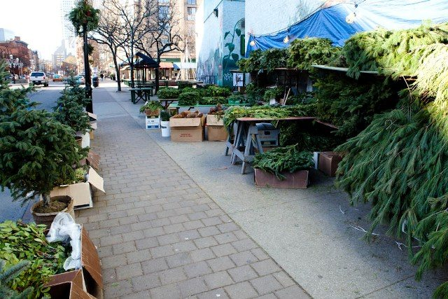 The Christmas tree lot at St. Lawrence Market.