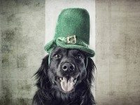 """It's St. Paddy's Weekend! We can see you're literally drooling with anticipation! Photo by {a href=""""http://www.flickr.com/photos/johnferri/5277297096/in/pool-torontoist""""}johnferri{/a} from the {a href=""""http://www.flickr.com/groups/torontoist/""""}Torontoist Flickr Pool{/a}"""