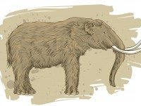 The mastodon was fractionally smaller than its relative, the mammoth.