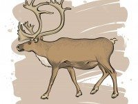 The Torontoceros likely looked something like the caribou.