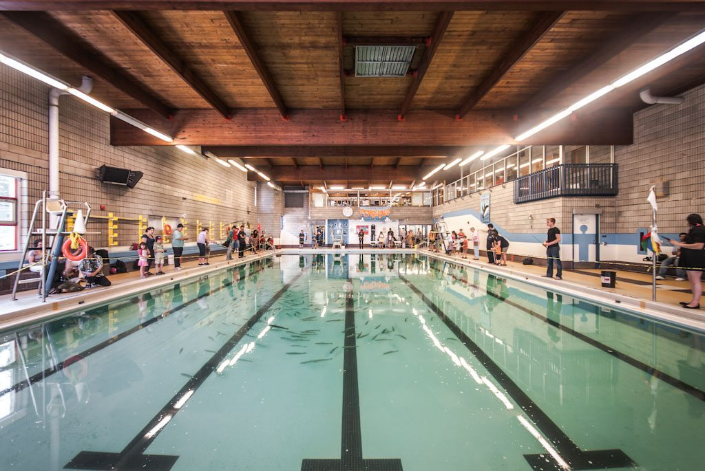 Fishing in an indoor swimming pool - Arc swimming pool ...