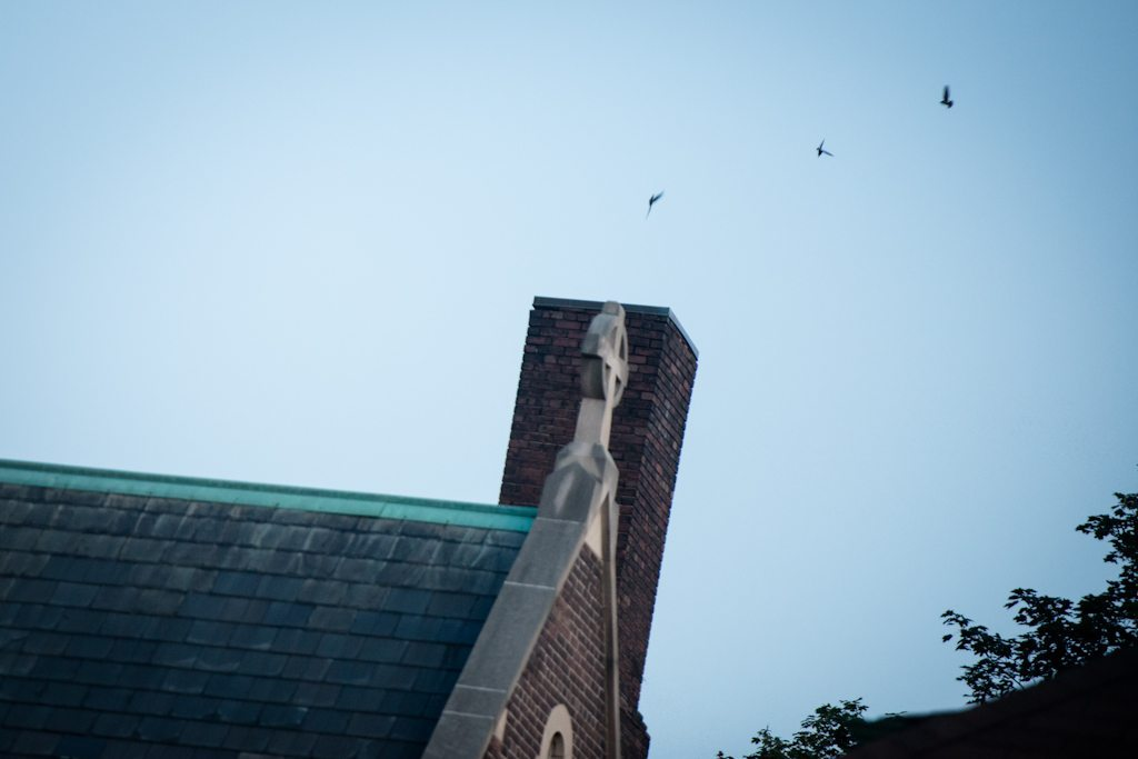 Three chimney swifts head home for the night.