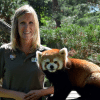 Photo of Hardstaff and red panda friend courtesy of Toronto Zoo.