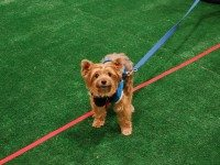 20121119woofstock_cutest.jpg