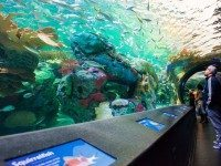 20131016- Ripleys Aquarium of Canada Opening-2120- Photo_by_Corbin_Smith
