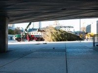 20131103-Nathan Phillips Square Christmas Tree-4044- Photo_by_Corbin_Smith
