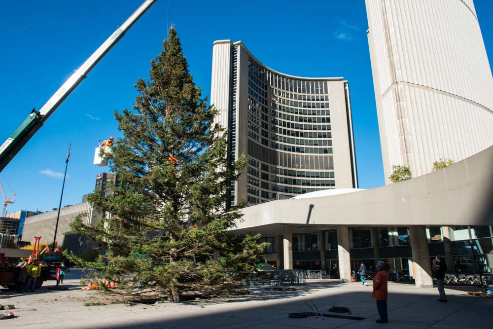 Christmas Comes to Nathan Phillips Square