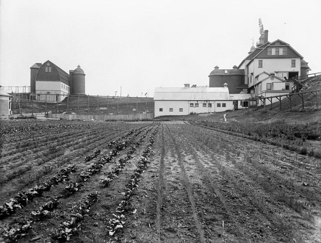 Farm buildings and vegetables at Dentonia Park Farm, no date  From the Library and Archives Canada (PA 026097)