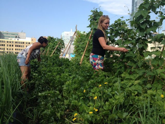 City Failing To Harvest Potential Of Green Roofs