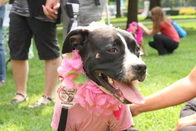Ontario's Pit Bull Politics Still Howling a Decade After