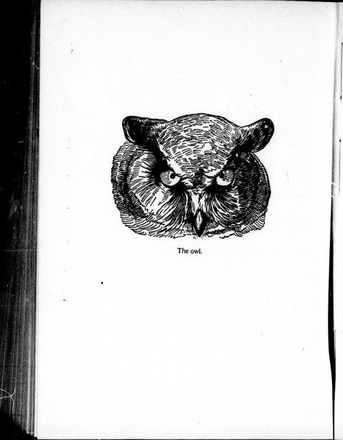 Seton's drawing of an owl in Wild Animals I Have Known.  Image via Wikimedia.