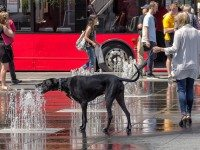 At least this dog knows how to stay hydrated. Photo by Gary Baker from the Torontoist Flickr Pool.