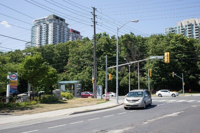 Photo of the Frank Flaubert Wood Lot at Ellesmere and McCowan by Anders Marshall.