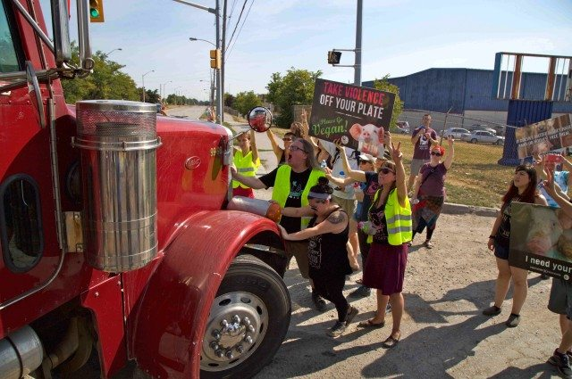 An all-day vigil outside GTA slaughterhouses on Aug. 11 grew tense. Photo by Zach Ruiter.