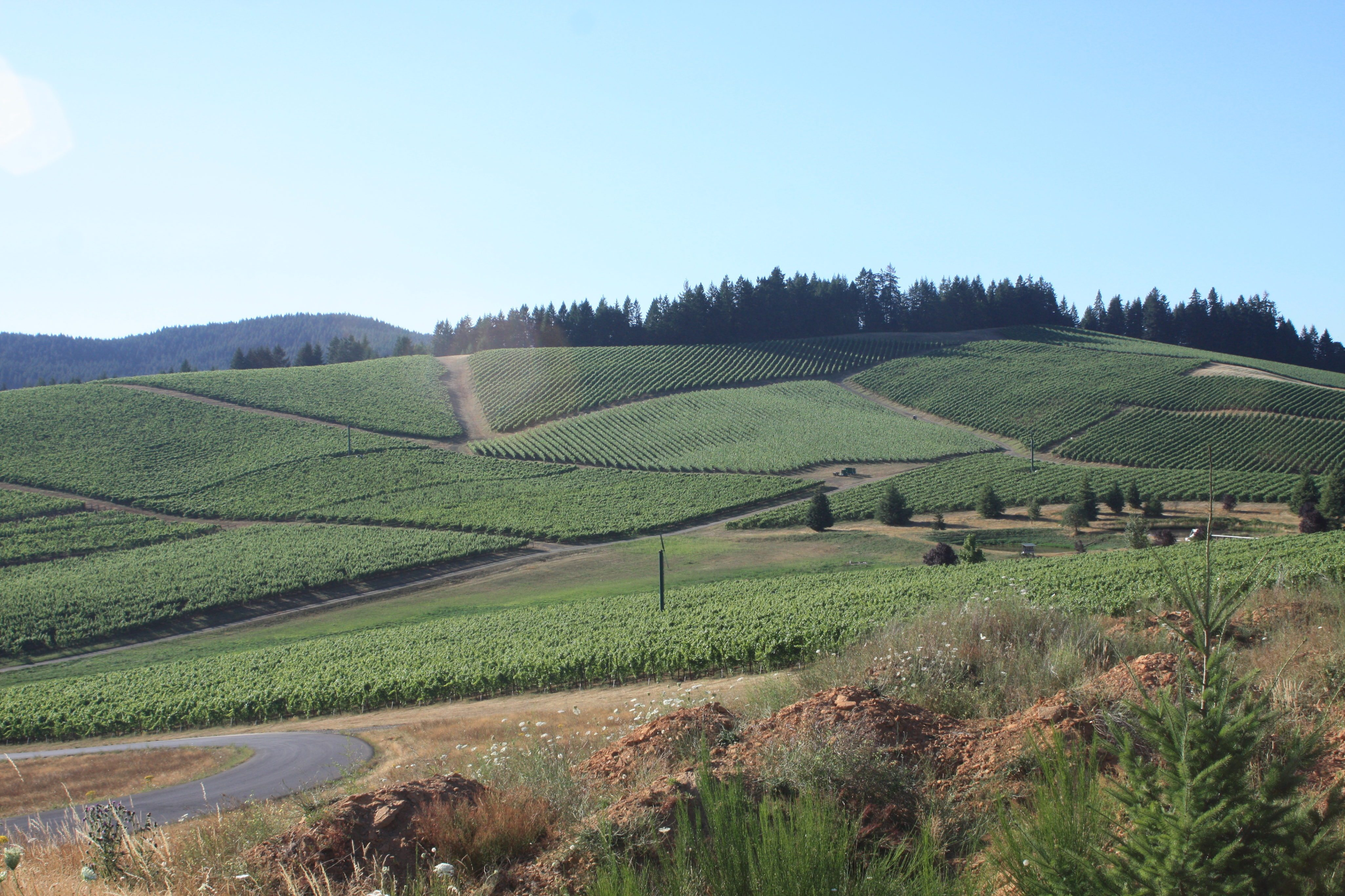 What Ontario Wineries Can Learn From Oregon
