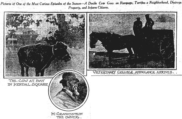 From the June 16, 1913 edition of the Toronto Star.