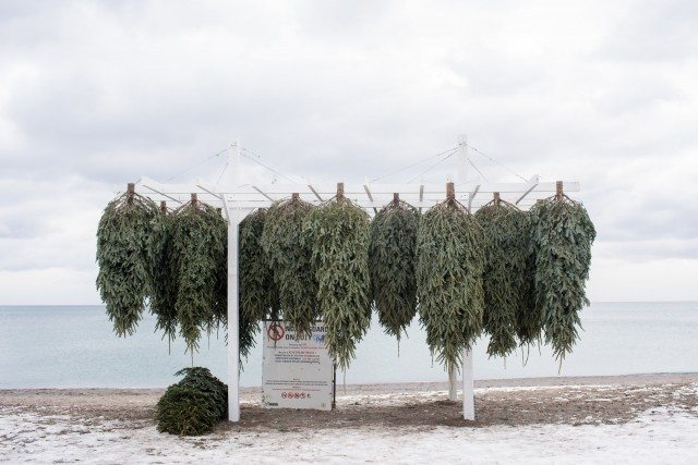 """North,"" by studioPERCH in Montreal, features 41 fir trees suspended in mid-air. Photo: Khristel Stecher 