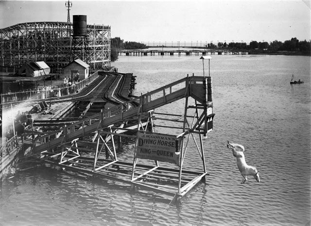 The diving horse at Hanlan's Point, c. 1907-1908. City of Toronto Archives, Fonds 1244, Item 191.