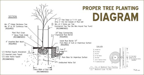 tree_diagram