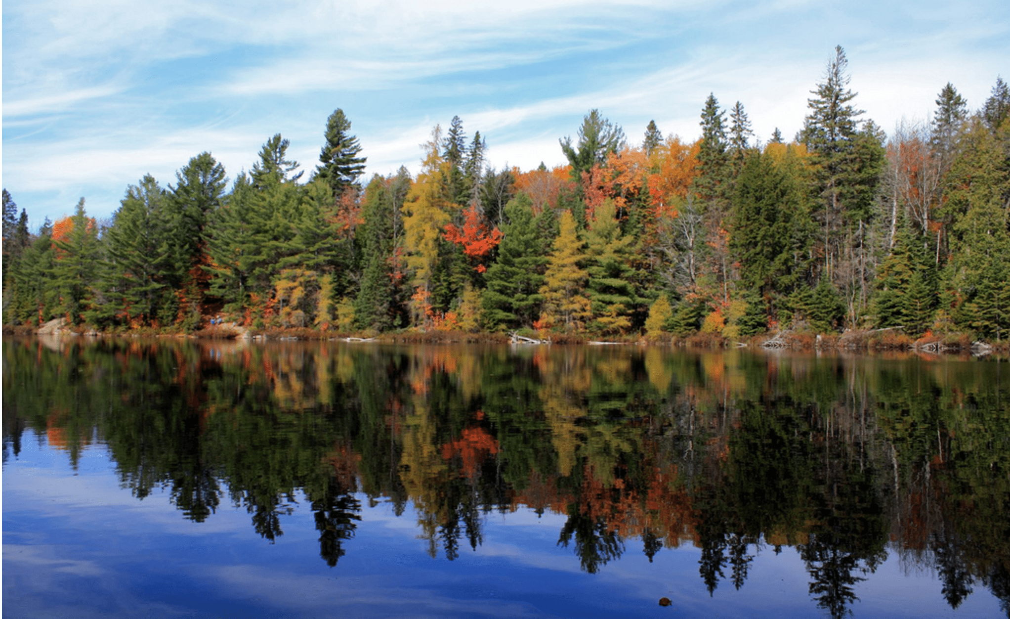 The Group of Seven often painted scenes of the North in Algonquin Park (pictured here). Photo by  Alex in the Torontoist Flickr Pool.