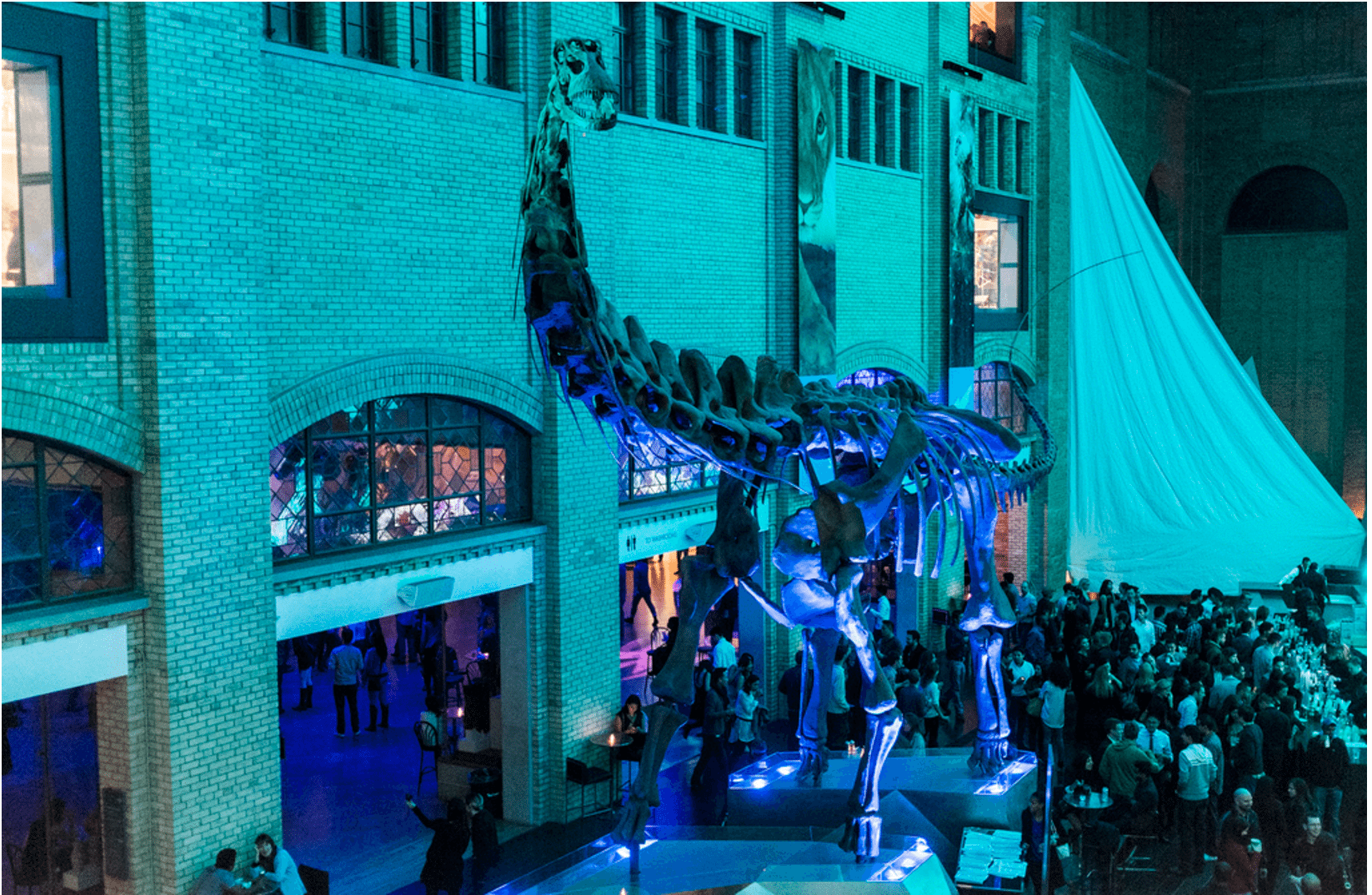 Friday Night Live at the ROM in 2013. Photo by Jae Yang in the Torontoist Flickr Pool.