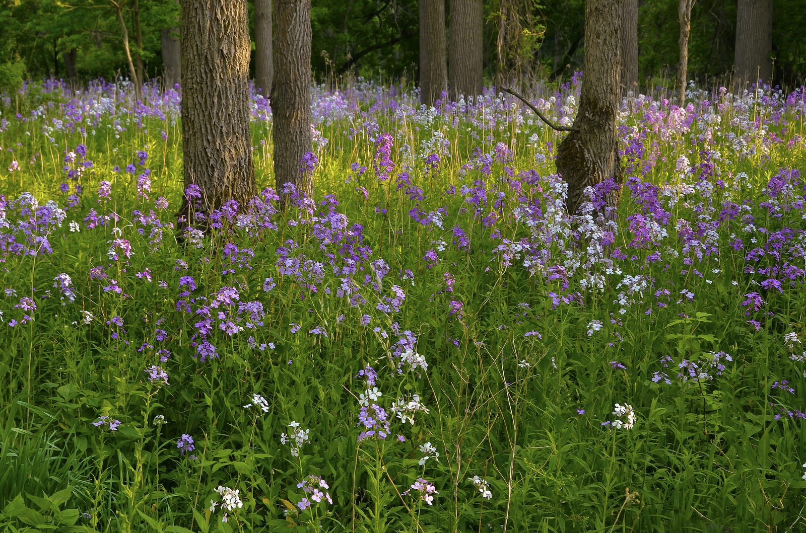 Flowers in the Short Hills. Photo courtesy of the Friends of the Greenbelt Foundation.